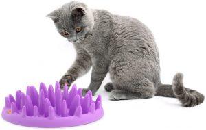 Chat va bien gamelle chat