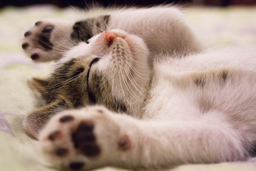 Chat va bien croquettes chat