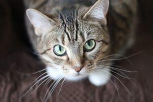 chat va bien distributeur croquettes chat
