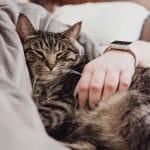 Comment les chats nous montrent leur amour