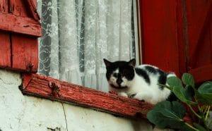 chat fenetre